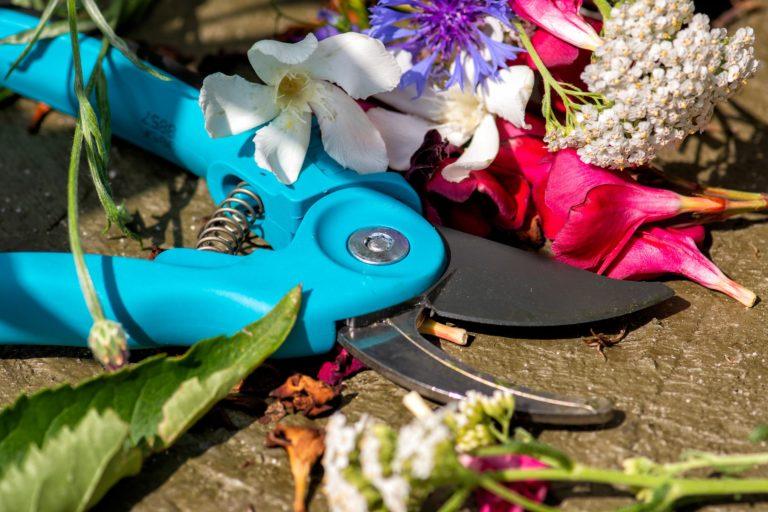gabrielle coaching snoeischaar en bloemen